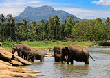elephants herd in jungle