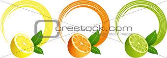 Citrus fruit round frame