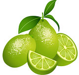 Juicy green citrus fruit