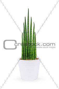 green plants in flowerpot