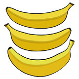 Vector illustration of the banana