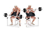 Preacher curl biceps exercise. Anatomical illustration. Isolated. Clipping path