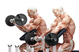 Biceps exercise with EZ curl bar. Anatomical illustration. Isola