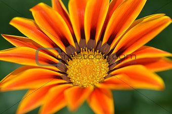 Beautiful flower in a meadow
