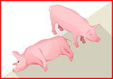 Pig isometric flat vector 3d