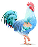 Blue bird cock. Blue Rooster symbol 2017 year