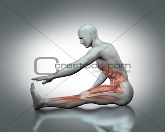 3D medical figure in stretching pose