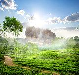 Sigiriya and tea field