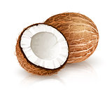 Coconut tropical nut fruit with cut vector