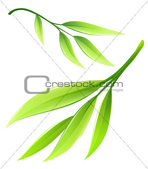 Branch with green bamboo leaves vector illustration