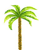 Tropical coconut palm tree with green leaves vector illustration