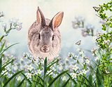 Gray lovely rabbit in a grass. Children's illustration