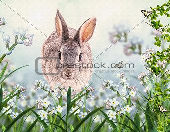 Gray lovely rabbit in a grass. Children's illustration