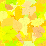 Seamless pattern. Autumn leaves