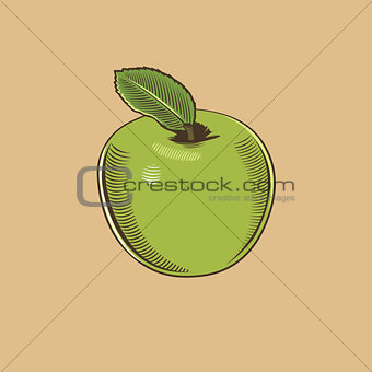 Apple in vintage style. Colored vector illustration