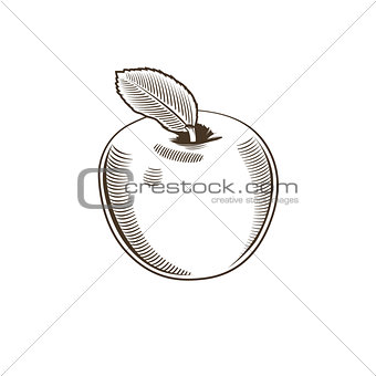 Apple in vintage style. Line art vector illustration