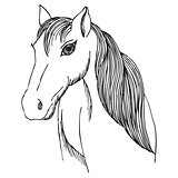 Hand drawn horse with long mane and bang