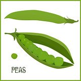 pods of green peas isolated vector illustration