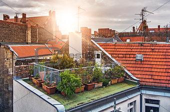 Small rooftop garden