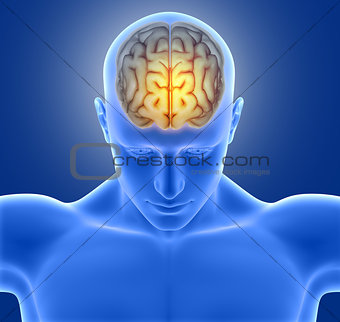 3D medical image of male figure with brain