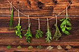 Culinary herbs.
