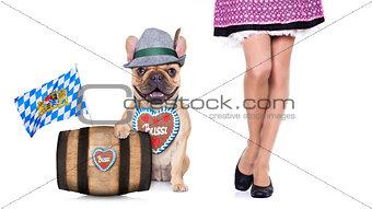 bavarian   dog