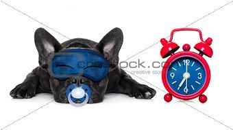 sleepyhead  baby dog