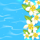 Tropical flowers on a blue background.