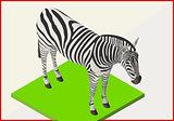 Zebra flat vector isometric 3d