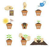 Planting The Seed Sequence