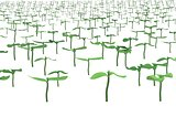 field with planted sprouts 3d illustration