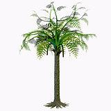 Alethopteris Tree