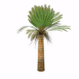 Jurassic Cycad Plant