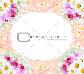 frame from different flowers orchids tulips camomile