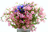bouquet of wild flowers pink and blue on a white background