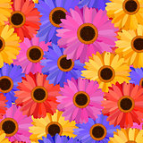 Gerbera Seamless Pattern Floral Background