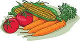 Vegetable Garden Crop Harvest Drawing