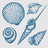 set of various seashells