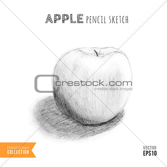 Apple hand drawn sketch