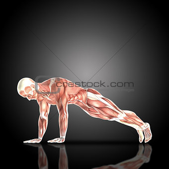 3D render of a medical figure with muscle map in press up pose
