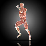 3D render of a medical figure with muscle map in running pose