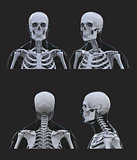 human skeleton anatomy on dark gray background