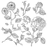 hand drawn wild roses set