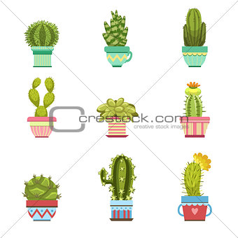 Cactus In Pot Collection
