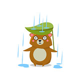 Brown Bear Under Rain