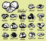 set of eighteen stylish vector templates of nuts for menu