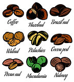 set of colored symbols patterns different seeds, nuts, fruits