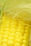 Detail shot of fresh corn on cob