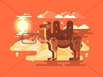 Camel in desert flat