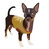 Chihuahua Dog 1